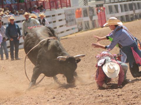 夏延邊界節的駕馭蠻牛活動